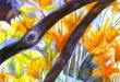daylilies-sm