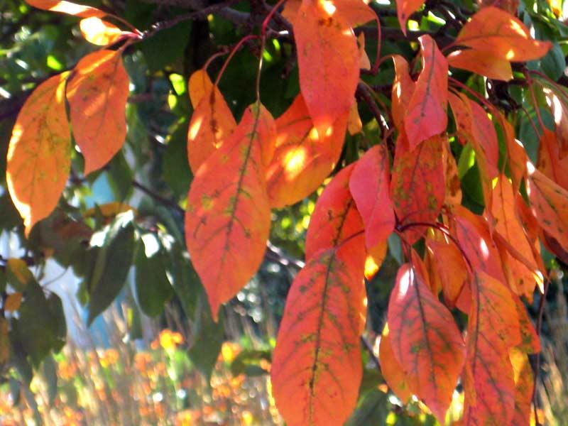 Fall in summer