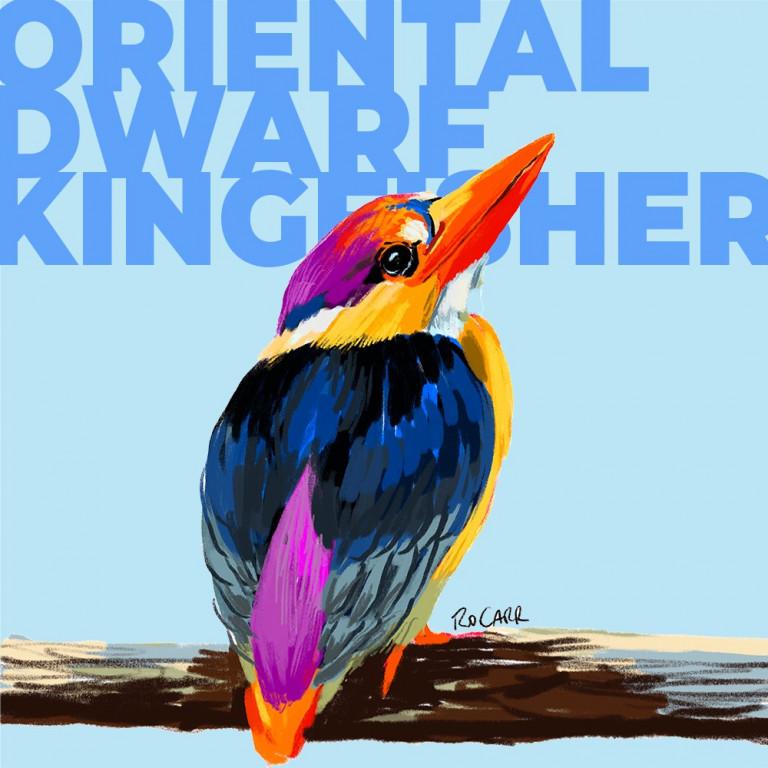 ORIENTAL DWARF KINGFISHER-SM